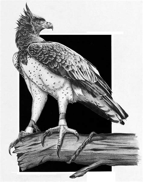 Lead Like A Tour Leader Limited martial eagle drawing by bowman