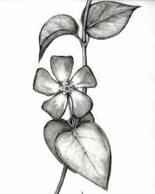 sketsa gambar bunga yang menarik warnagambar