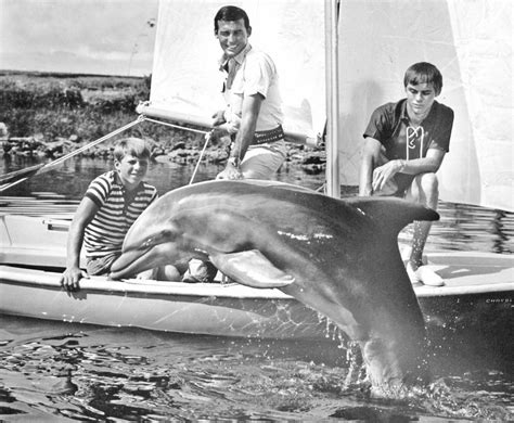 site flipper everyone s favorite dolphin the of tv show
