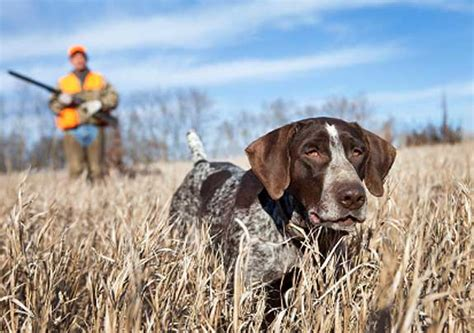 gun dogs what i learned about human nature from one year of gun return of