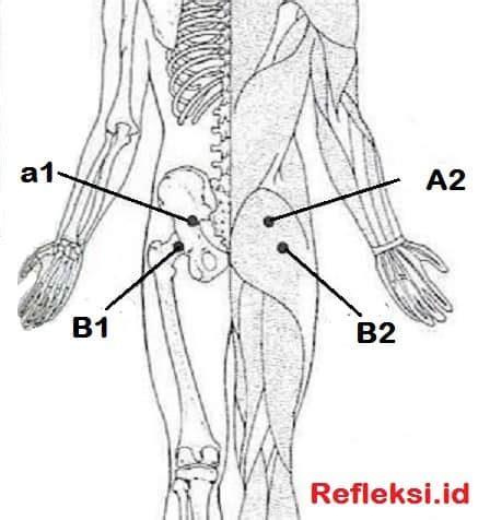 Pelangsing Pinggul Dan Pinggang mengobati sakit pinggang dengan pijat refleksi dan akupresur solusi sehat alami