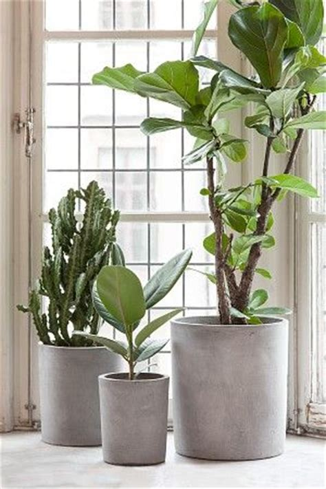 in door plant put in pot vide 25 best ideas about concrete pots on pinterest concrete