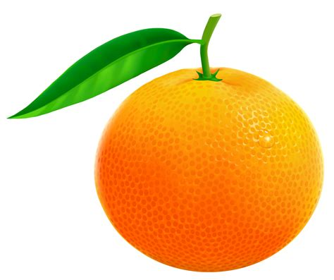 orange clipart free fruit orange cliparts free clip free
