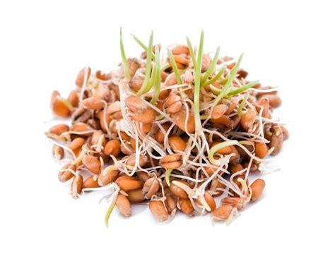 whole grains nuts and seeds your guide to soaking sprouting whole grains beans