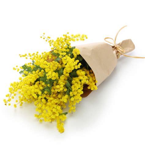 mimose fiori fiori festa della donna italy 8 marzo festa della donna