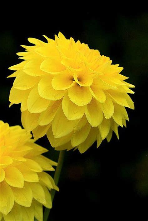 Pupuk Perangsang Bunga Yang Bagus galeri bunga bunga indah dan cantik tips dan inspirasi