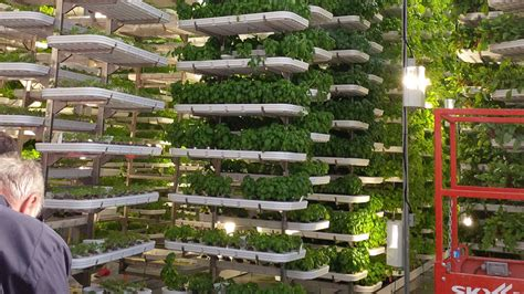 Hydroponics Garden by Benefits Of Hydroponic Gardening For Your Grow Room