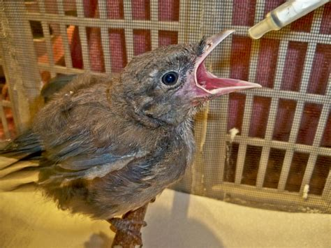 Do If You Search Them On What To Do If You Find A Baby Bird Wildlife Education Rehabilitation Center