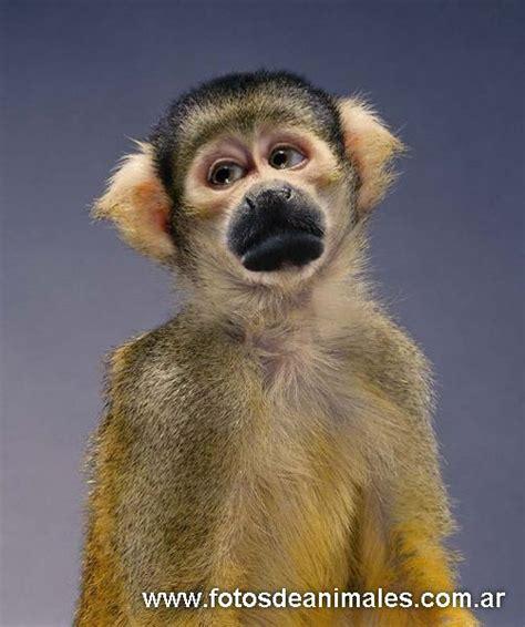 imagenes animales divertidos fotos de animales divertidos
