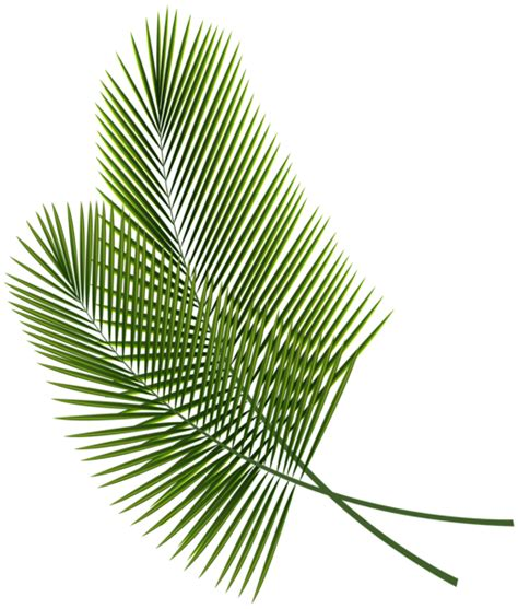 tropical pattern png tropical leaves png clipart image wallpapers pinterest