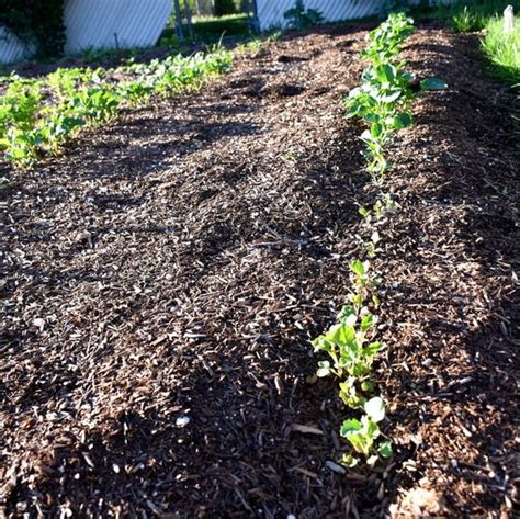 Organic Soil For Vegetable Garden How To Build A Vegetable Bed Biodynamically Part 2