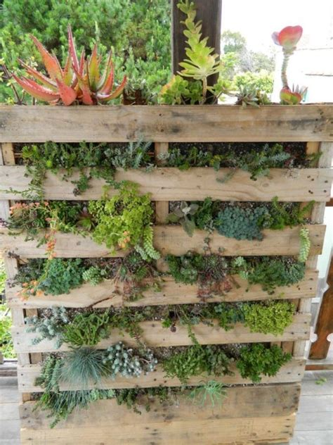 vertical garden containers for sale 17 best ideas about succulent wall gardens on