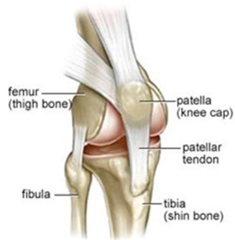 kneecap diagram patellar instability shoulder and knee