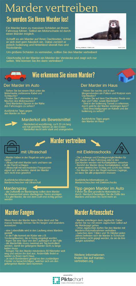 marder im haus vertreiben 4446 marder vertreiben org infografik