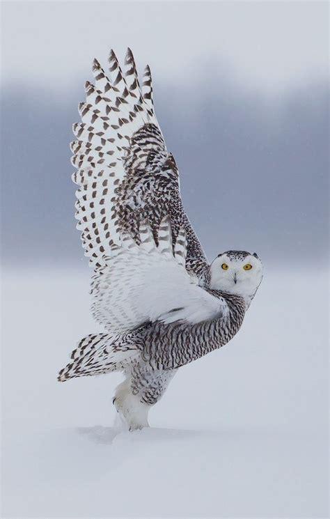 19 best images about owls on pinterest owls owl and bluechipmoney com bluechipmoney com beautiful wildlife