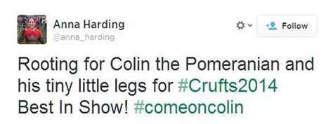 colin the pomeranian colin the pomeranian was robbed at crufts and here s why