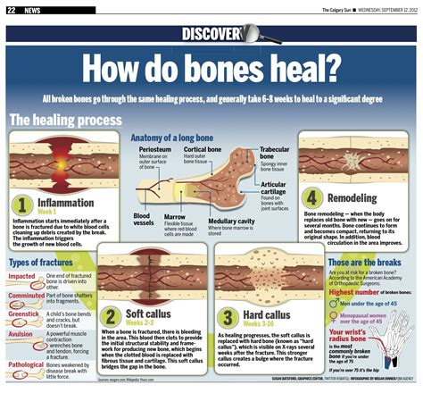 how long does it take to heal a tattoo how do bones heal all broken bones go through the same