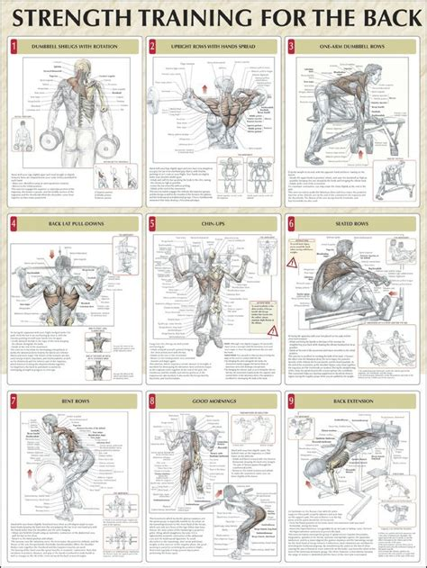 8 Important Pre Workout Activities by 9 Strength Workouts For The Back Anatomy