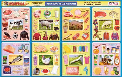 derivados de los animales derivados de la gallina tema zoolog 237 a chikipedia l 225 minas escolares