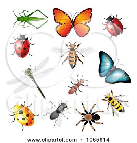 printable insect poster printable clip art insects colorful insects posters art