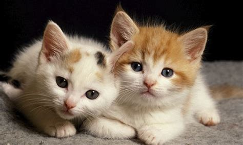 cat pictures cat pictures all time favorite images of cats pets world
