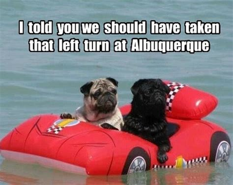 dog on boat quotes funny and cute pugs 20 pics