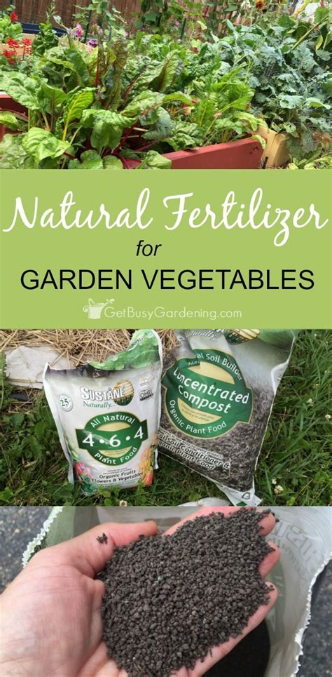 Organic Fertilizer For Vegetable Garden 1000 Images About Growing Vegetables On