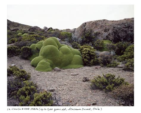 oldest living photographing the oldest living things in the world