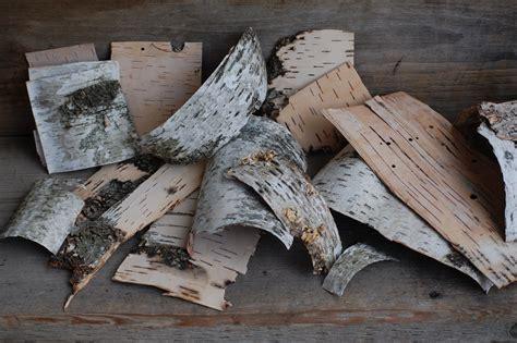 Birch Tree Paper For Crafts - birch bark birch pieces birch sheets craft by