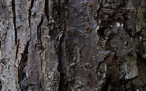 tree bark 17 fantastic hd tree bark wallpapers hdwallsource