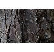 Tree Wallpaper Bark Hd  HD Desktop Wallpapers 4k