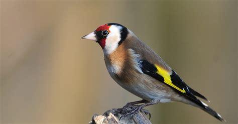 vendita uccelli da gabbia vendita animali esotici in giappone quotes