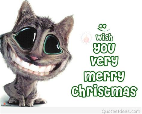 funny cat christmas card sayings merry christmas happy  year  quotes
