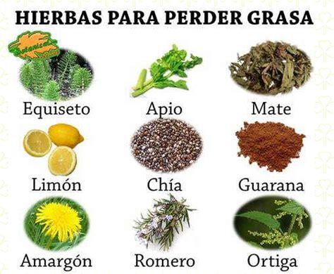 plantas medicinales remedios caseros medicina natural remedios naturales con plantas sentirse bien es