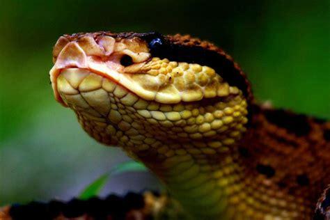 imagenes de serpientes oscuras serpientes son poco conocidas por los seres humanos