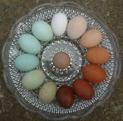what color are blue eggs elles color wheels