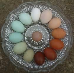 colored egg layers elles color wheels
