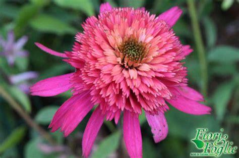 nomi di fiori rari questo settimana piante e fiori rari al di
