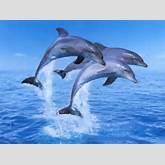 url=http://gb-pics24.com/][img]http://gb-pics24.com/gbpics/delfin ...