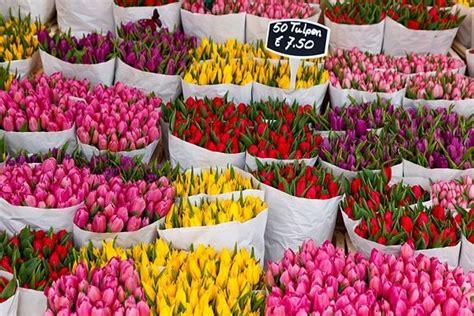 mercato di fiori mercato dei fiori galleggiante bloemenmarkt vivi amsterdam