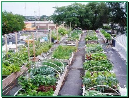 Vegetable Roof Garden Native Home Garden Design Rooftop Vegetable Garden