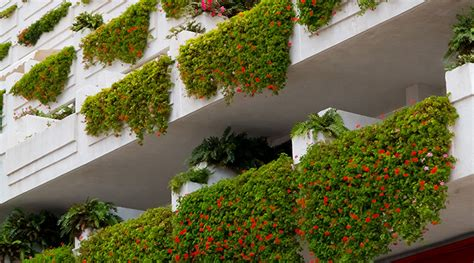 Plants That Don T Need Water creating a balcony garden landera blog
