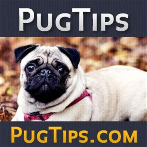 pug tips 1000 images about pug care on a pug activities and the o jays