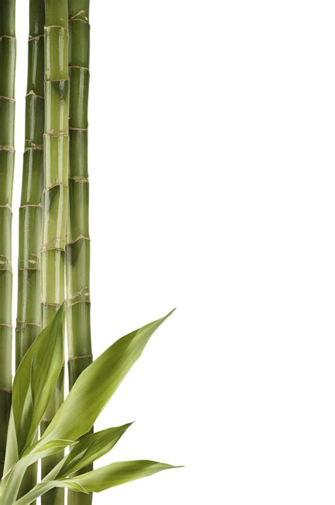 Plant For Bedroom by Bamboo Png Transparent Images Png All