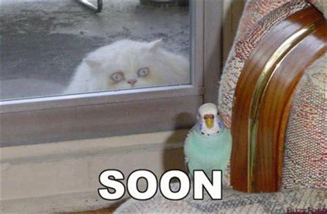 Cat Soon Meme - funny quot soon quot meme 38 pics