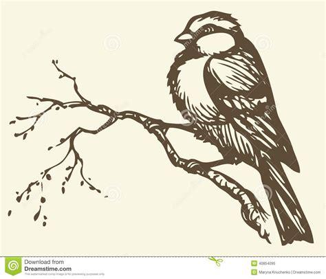 Bird On Branch Drawing