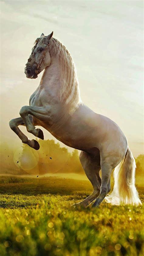 wallpaper iphone 6 horse 凛々しい馬 動物のiphone壁紙 iphonex スマホ壁紙 待受画像ギャラリー