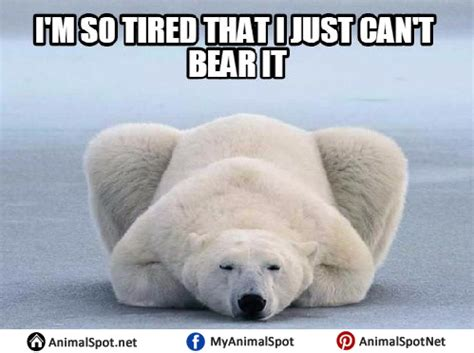 Polar Bear Meme - polar bear memes