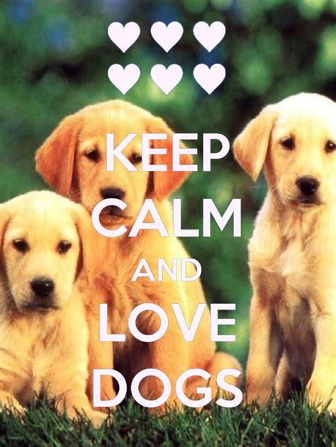 calm dogs 80 best images about keep calm on trust in