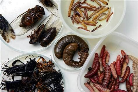 what do bed bugs eat eating bugs a lucrative market in mexico business us business food inc nbc news